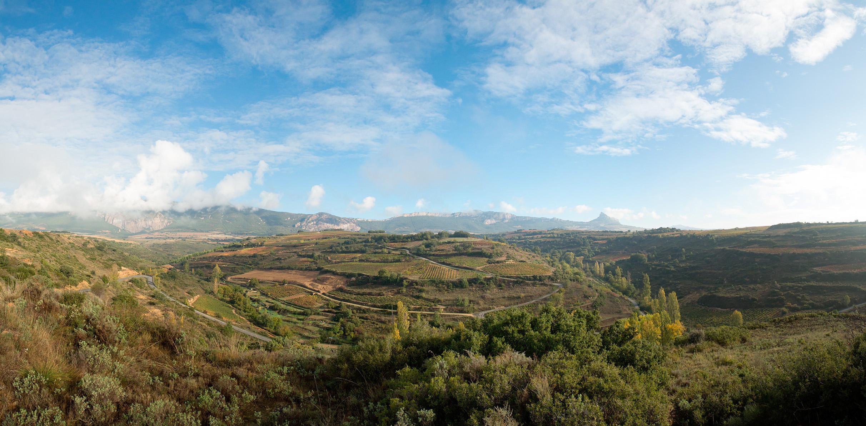 Panorámica-Rioja-Alavesa